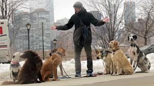Hayvan Dostları İçin uberPET Yollarda 1
