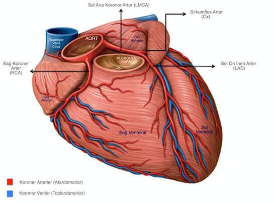 kalp-nedir