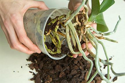 orkide-ciceğinin-bakimi-nasil-yapilir