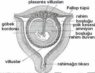 kadinlarda-hamileligin-sekizinci-haftasinda-yasanacak-degisimler-nelerdir-1