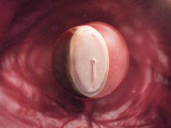 kadinlarda-hamileligin-ucuncu-haftasinda-yasanacak-degisimler-nelerdir-4